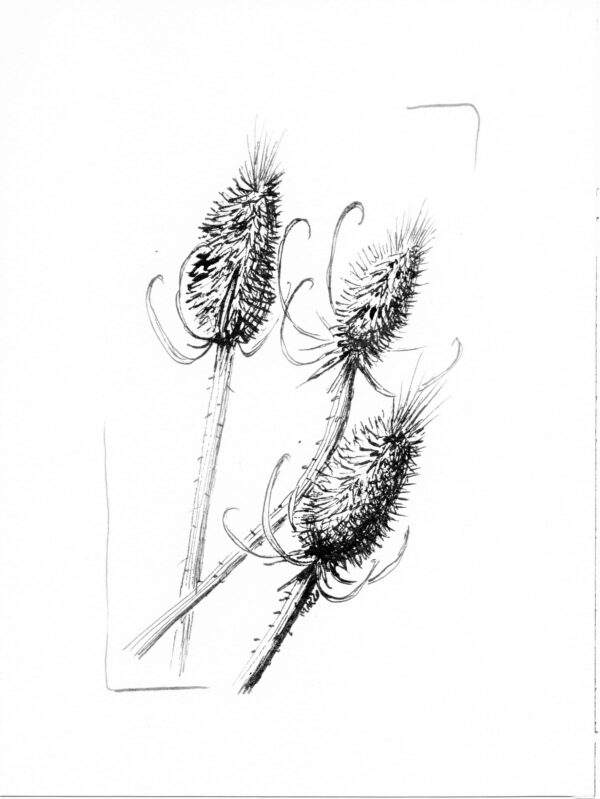 Thistles Pigments by Marianne